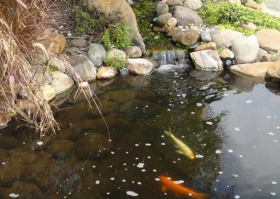 natural rock fountain with koi fish