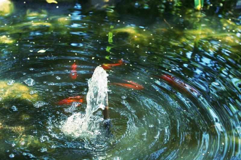 3 Tips for Wintertime Pond Care in Largo, FL
