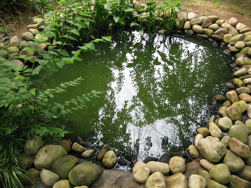 3 Steps to Creating the Most Beautiful Backyard Pond This Spring