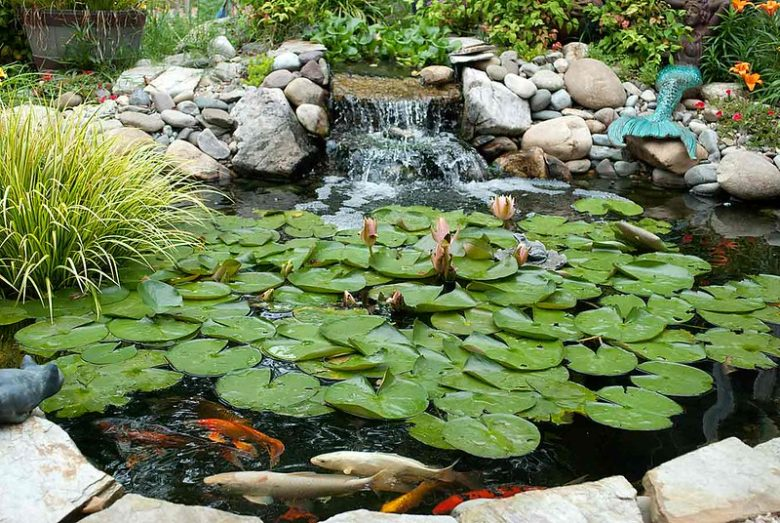 3 Tips for Maintaining a Clean Backyard Pond Through the Summer