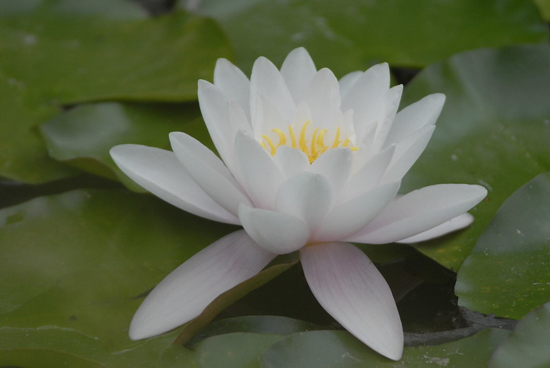 Which Aquatic Plants are Best for Your Backyard Pond?