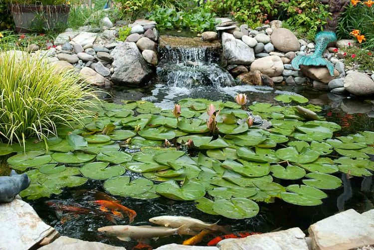 Maintenance Tips to Preserve Your Pond Pump and Filter